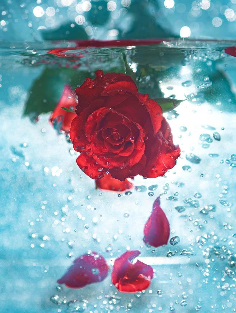 7 ways in which rose water trumps every other beauty product!