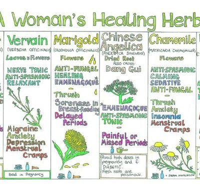 Herbs that heal… and a super-easy way of understanding them!