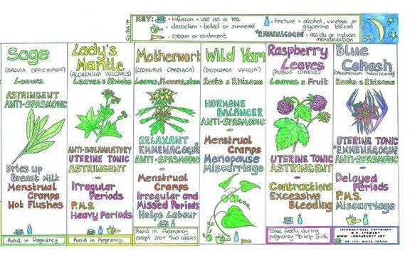healing herbs 3