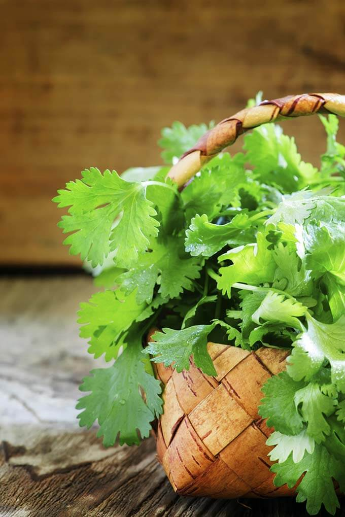 Fresh cilantro in a wicker basket, vintage wooden background, se