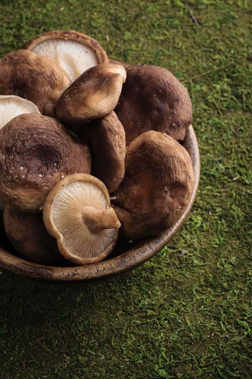 mushroom skincare, mushroom face cream, mushroom serum, mushroom beauty benefits