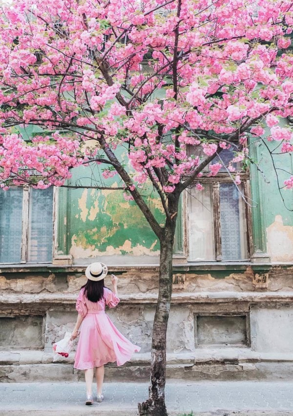 Cherry blossoms in skincare: The Japanese beauty secret that your skin needs NOW