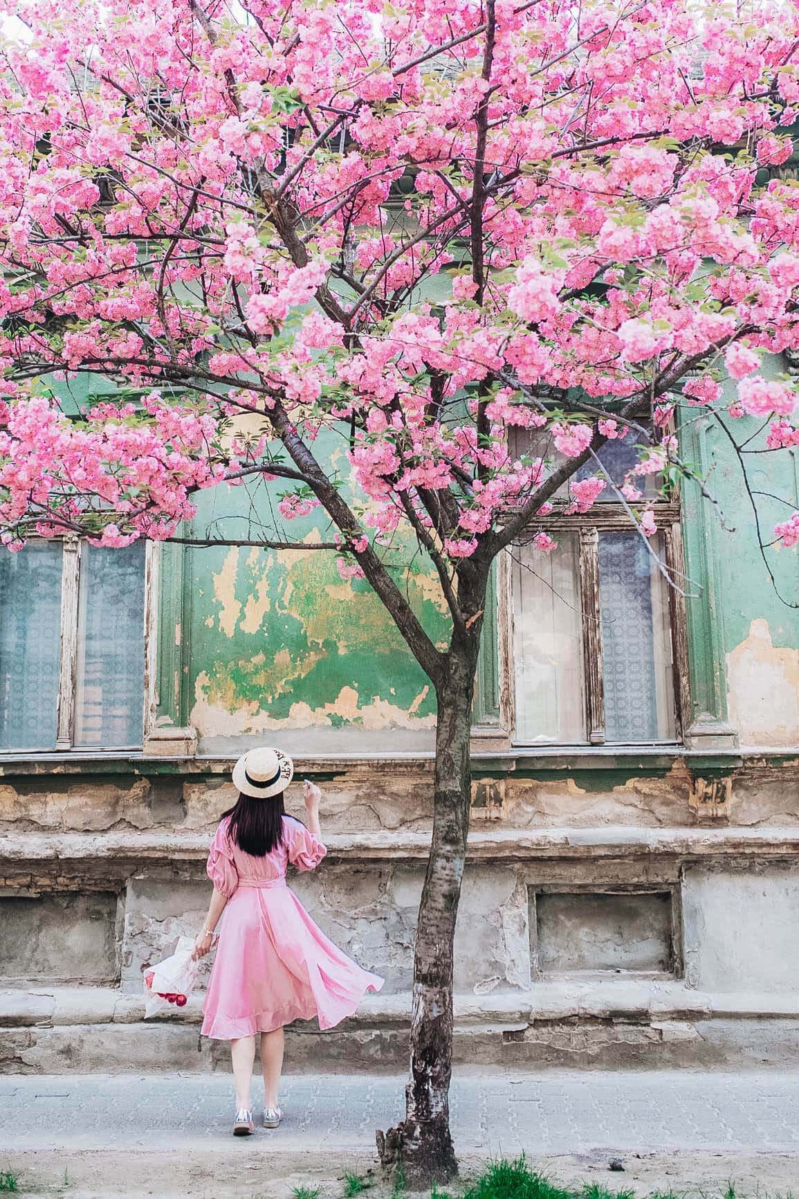 Cherry Blossoms In Skincare The Japanese Beauty Secret That Your Skin Needs Now
