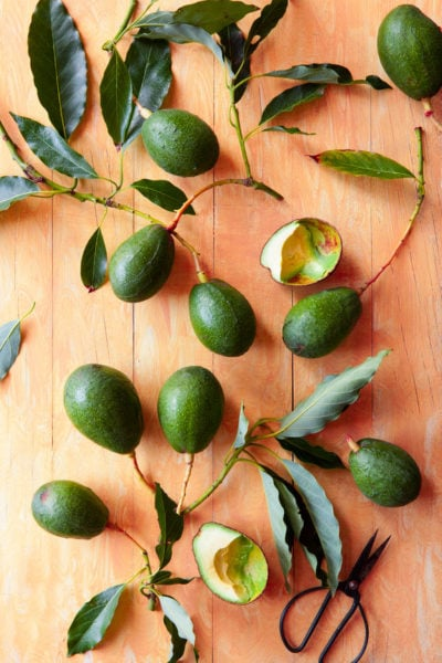Forget the fruit, stock up on avocado leaves instead