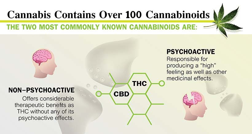cannabis vs thc
