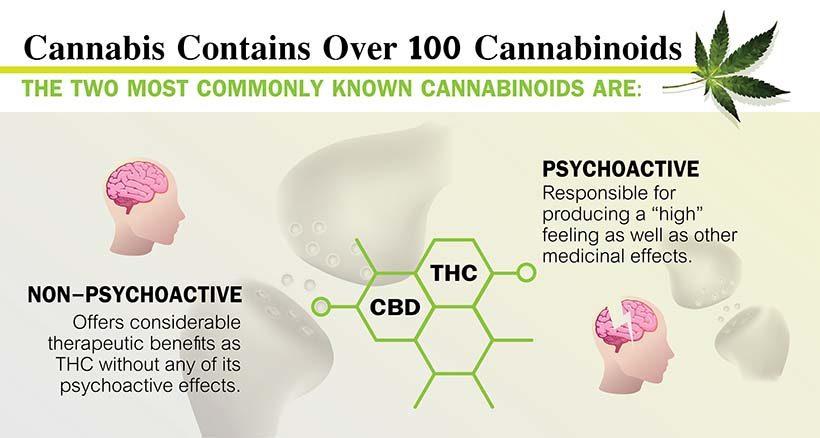 cannabis vs thc